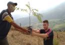Fundación Tierra Viva promueve la reforestación de la cuenca de Canoabo